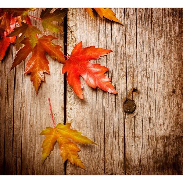 DLDP-001 Sonbahar Yaprakları Duvar Posteri