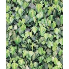 Faux Semblant J43404 Yeşil Yaprak Desenli Duvar Kağıdı