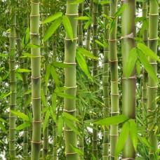 Virtual Reality J41504 Yeşil Bambu Desenli Duvar Kağıdı